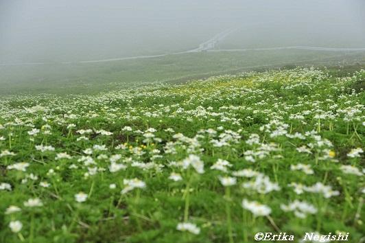 霧のお花畑