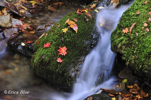 秋のわすれもの