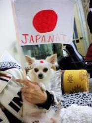 ガンバレ日本代表