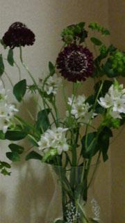 20100418flower.jpg