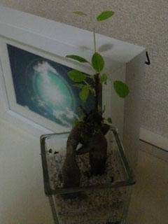 201007gajyamaru2.jpg