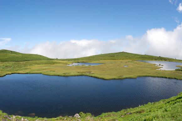 大雪山の高層湿原