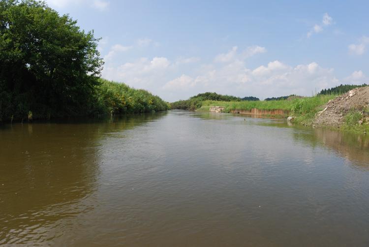 茨城県のナゴヤサナエ生息地