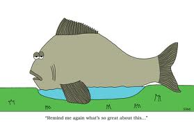 big fish 5