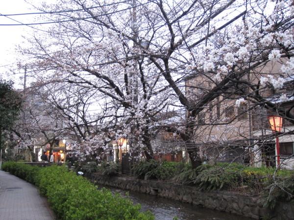 桜並木の高瀬川