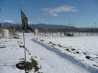 リンゴ畑 冬景色
