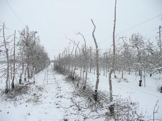 伐採 雪景色