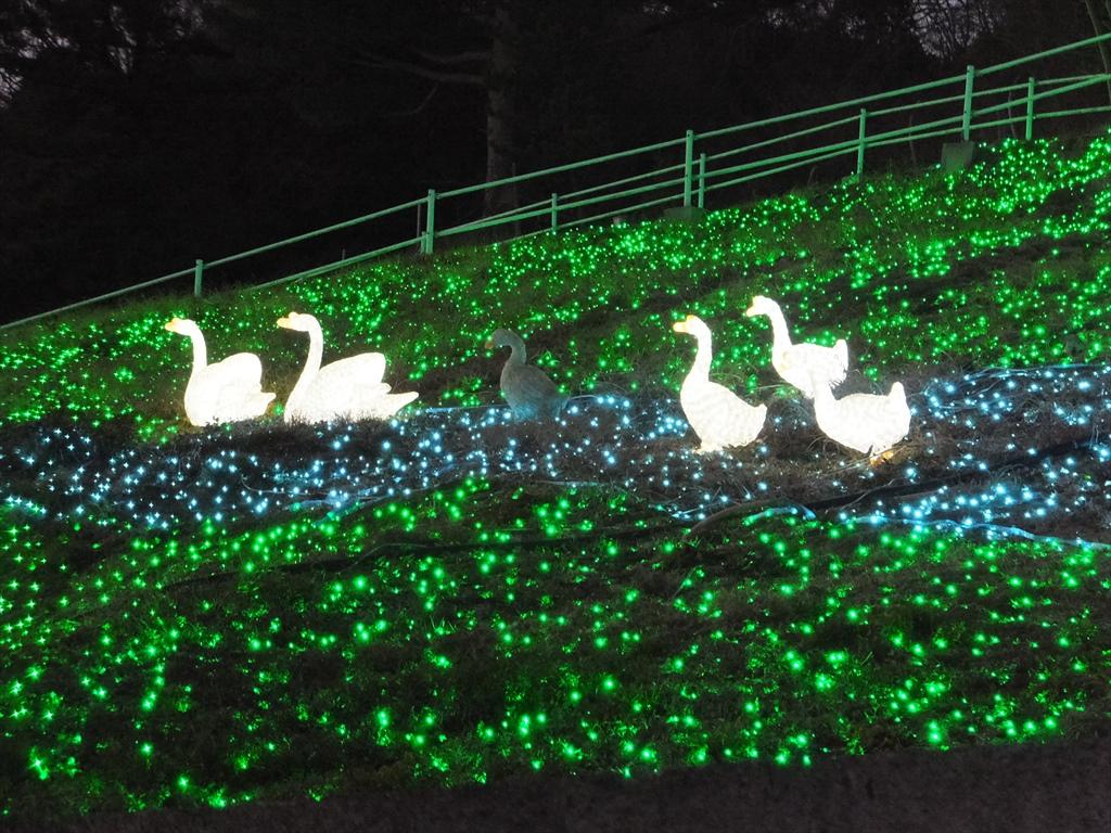 光の動物園_2