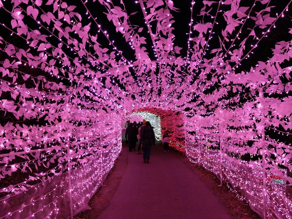 光の花畑_8