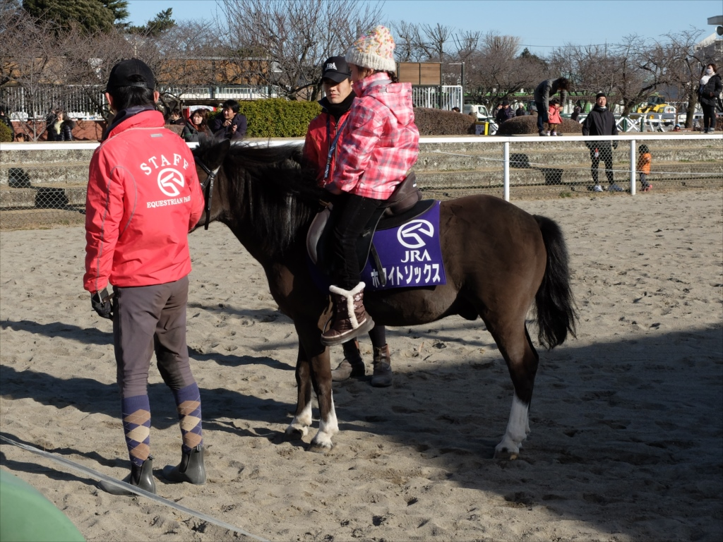 ポニーの体験乗馬_3