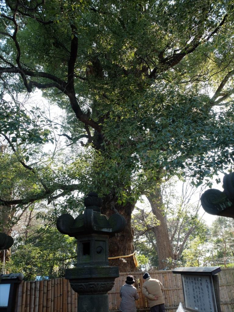 上野の祖木といわれる御神木『大楠』_2