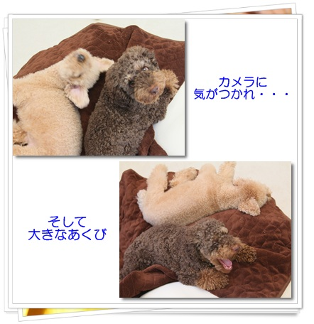 2011-10-28-3.jpg