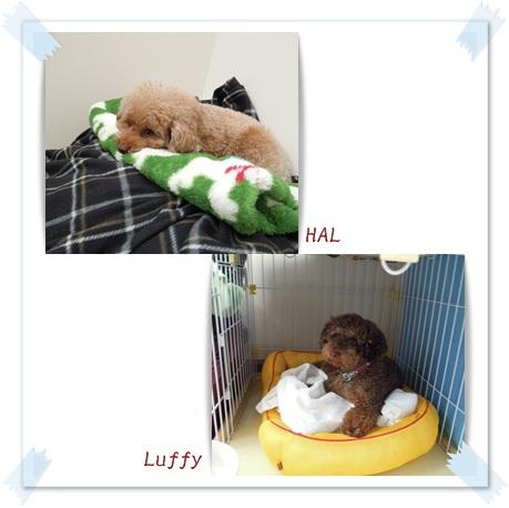 2011-12-10-4.jpg