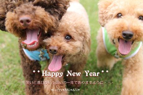 2012-1-1-33-111.jpg