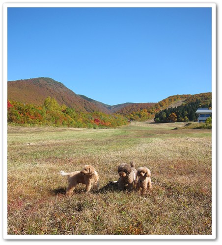 2012-10-21-113.jpg