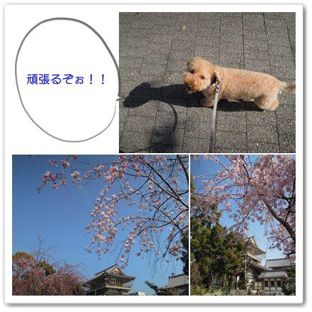 2012-4-10-2.jpg