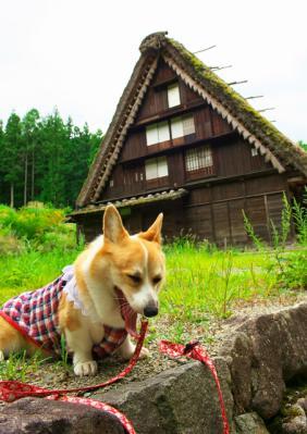 hidanosato_1008.jpg