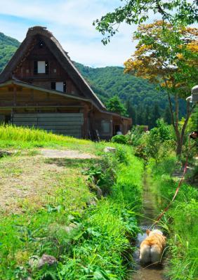sirakawagou_1022.jpg