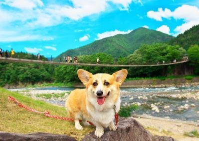 sirakawagou_1053.jpg