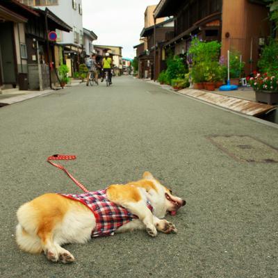 takayama_1021.jpg