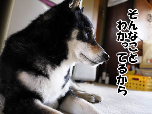 20110806_2.jpg