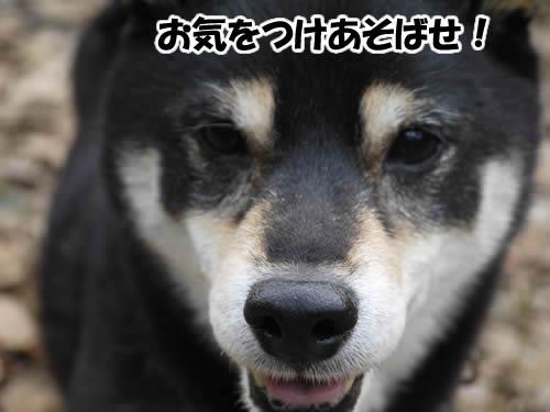 20120118_P1010469.jpg