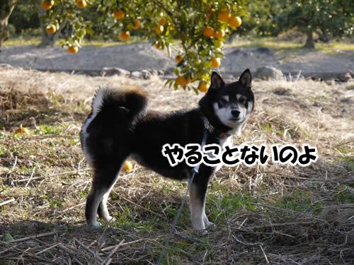 20120207_P1010506.jpg