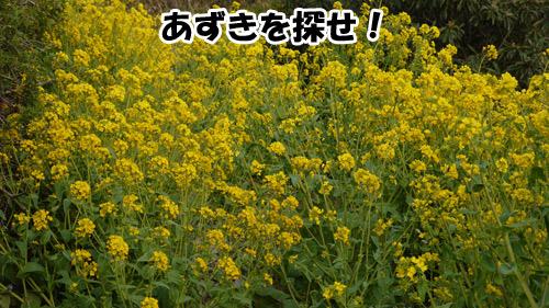 20120511P1010937.jpg