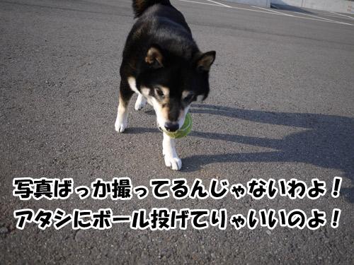 20120516P1010539.jpg