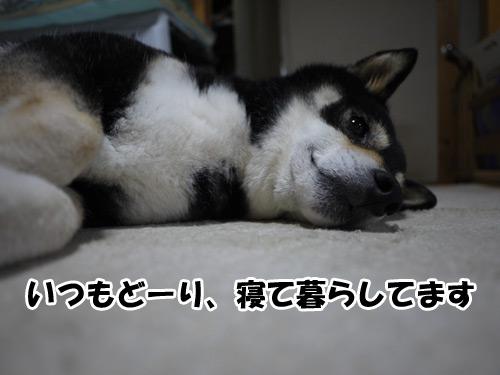 食っちゃ寝