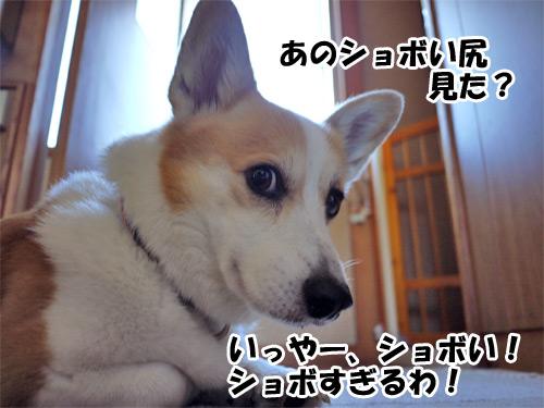 尻ショッボ~い!