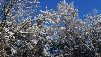 枝の雪と青空