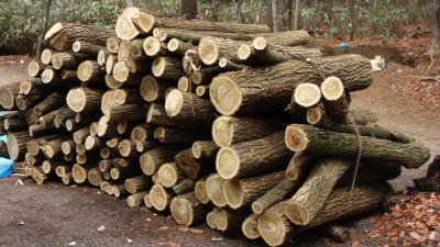 薪用の丸太