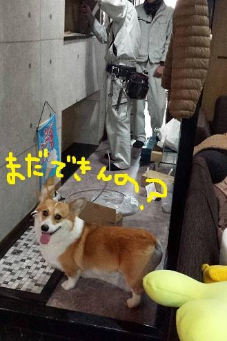 20140201-8.jpg