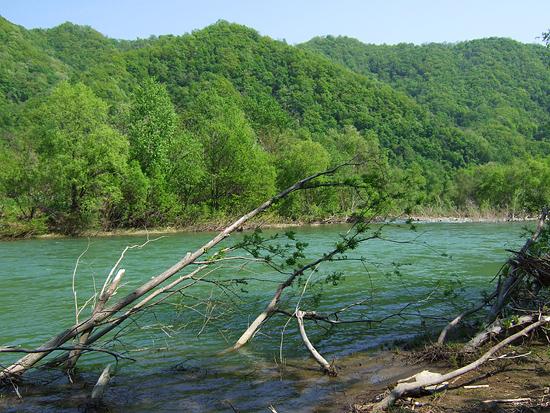 豊平川 春ゼミ 河原