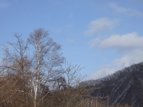雪 お散歩 茶太郎