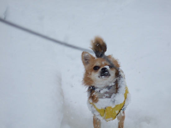 真駒内公園 猛吹雪 茶太郎