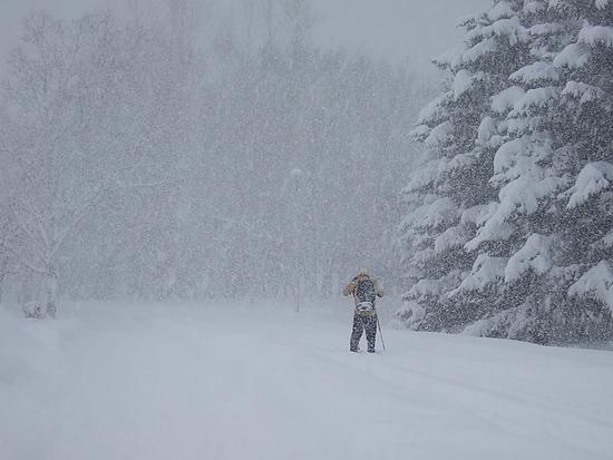 真駒内公園 猛吹雪 歩くスキー