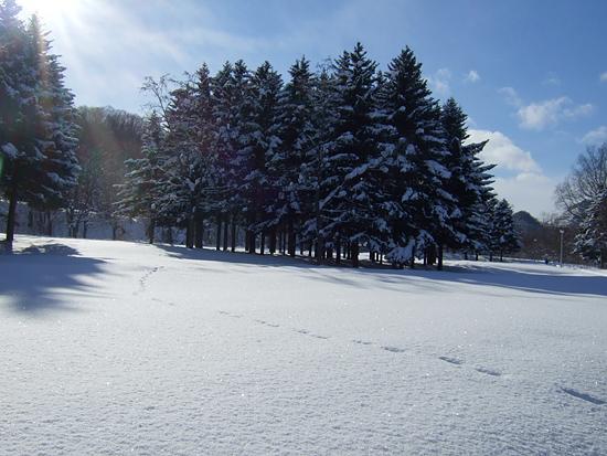 2012 雪 足跡