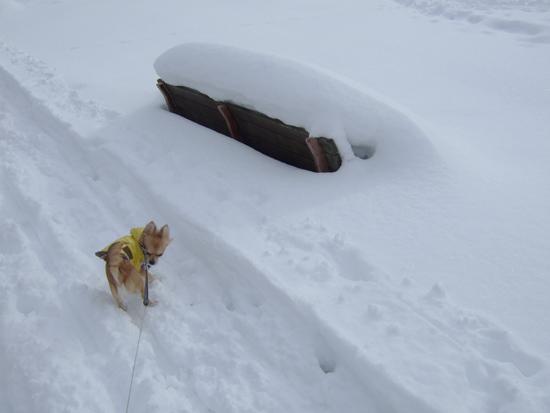 十五島公園 雪 ベンチ