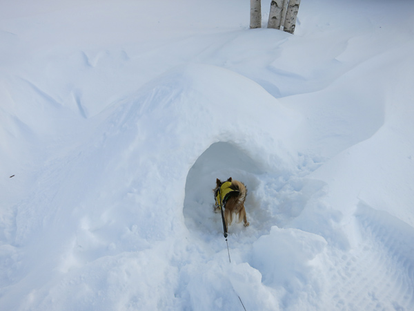 滝野スノーワールド かまくら ちっこい