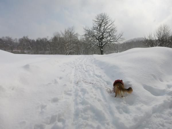 真駒内公園 雪 茶太郎