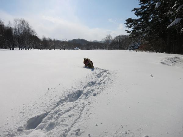 真駒内公園 雪景色 茶太郎