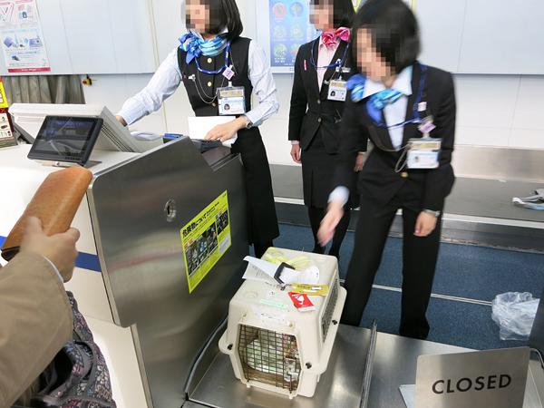 2013 九州行き 新千歳空港 茶太郎 預ける