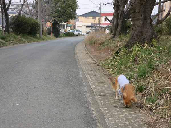 2013 九州行き 実家の近く 茶太郎