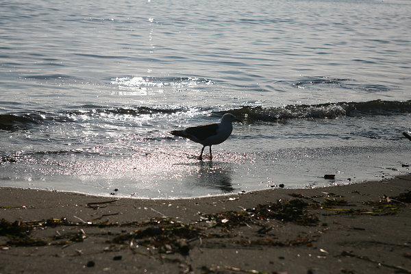 想い出海岸 渚 かもめ