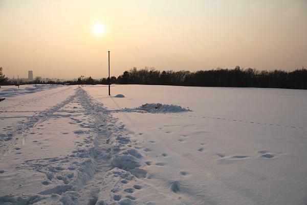野幌森林公園 雪景色 銀世界