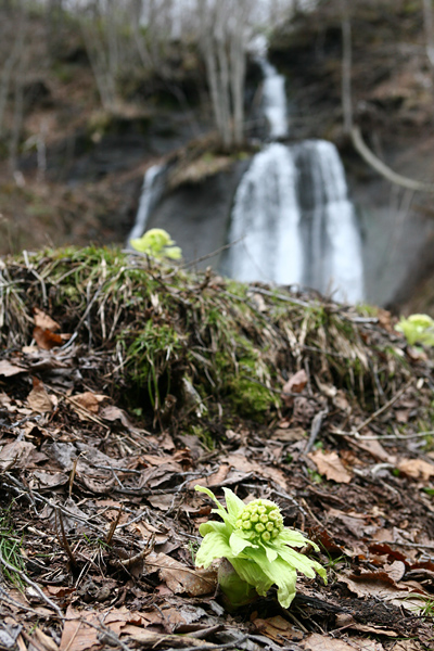 すずらん丘陵公園 鱒見の滝