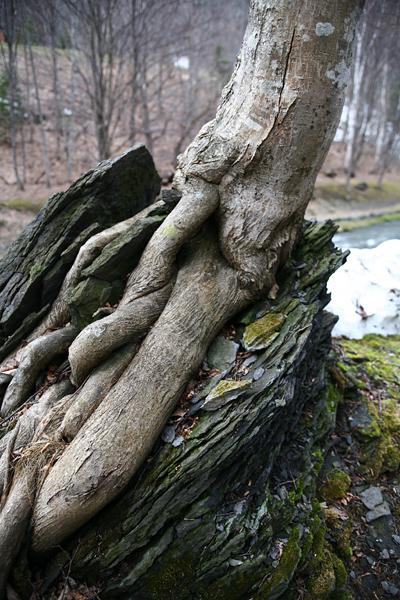 すずらん丘陵公園 岩 木