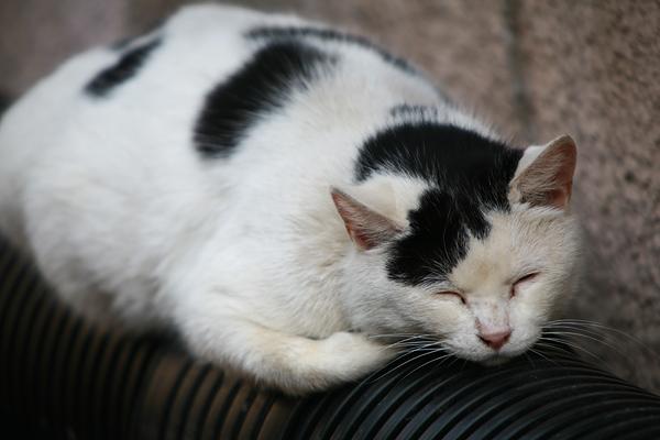 温泉猫 定山渓